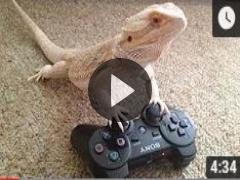 Lizards Are Silly